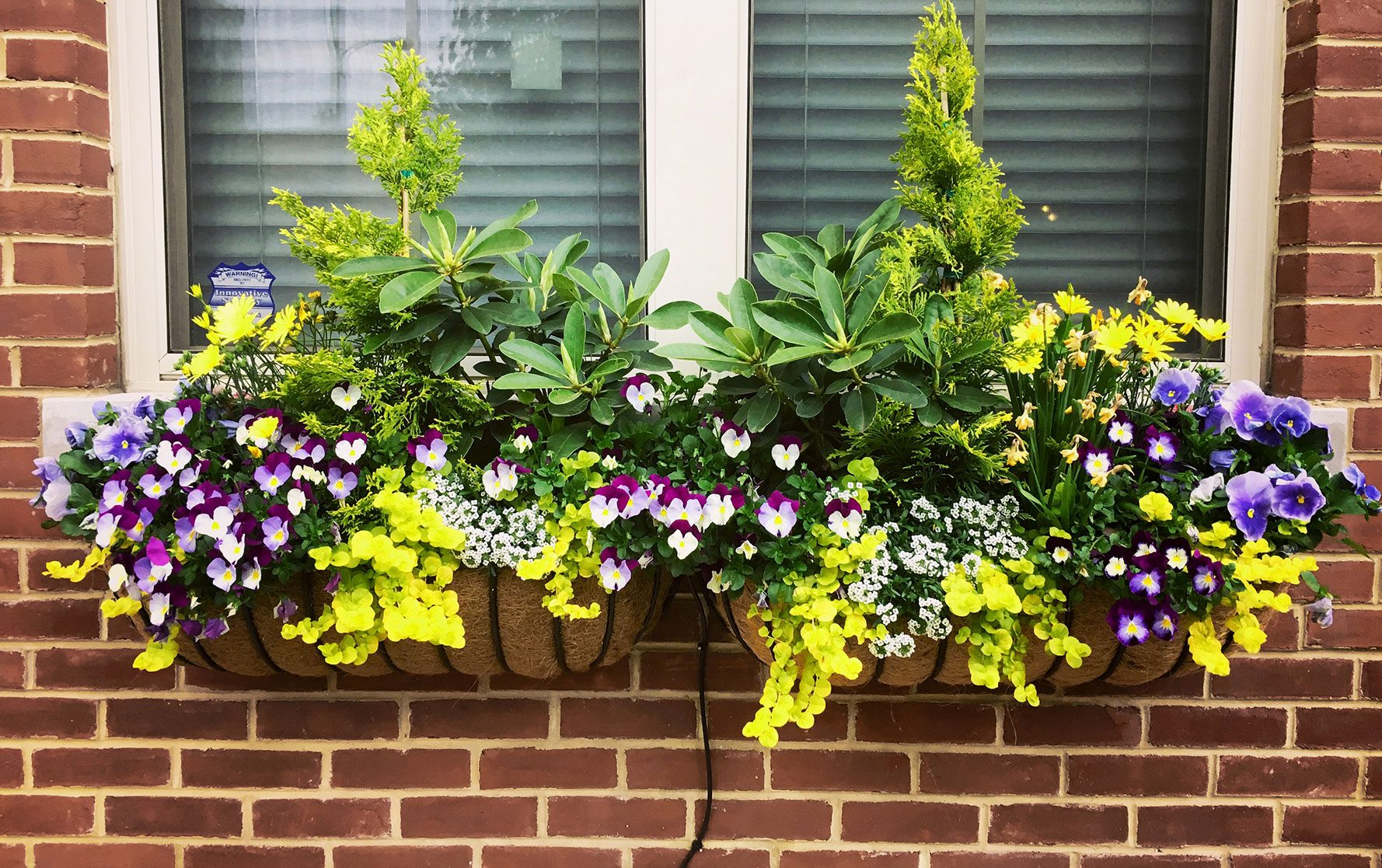 Two Colorful Spring Window Box Arrangements