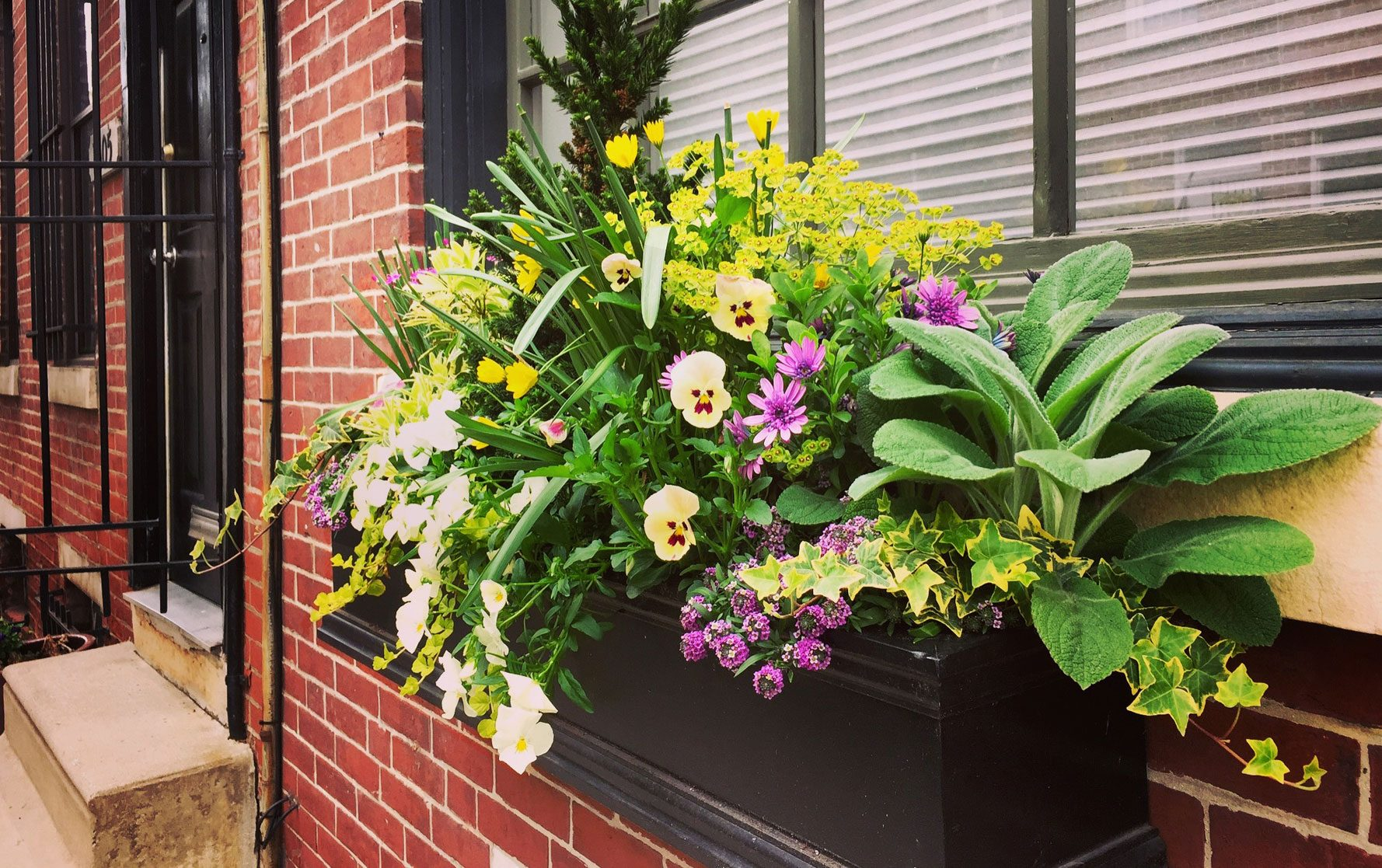 Front Door Window Box Spring Arrangement