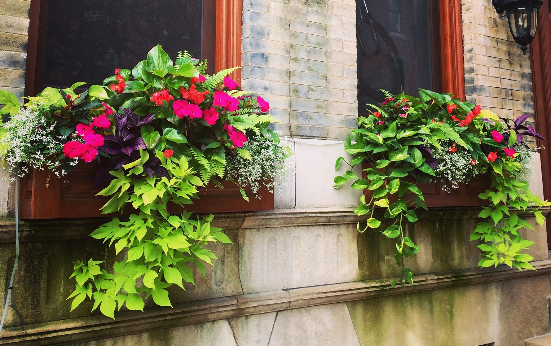Two Summer Planter Arrangements in wooden window boxes