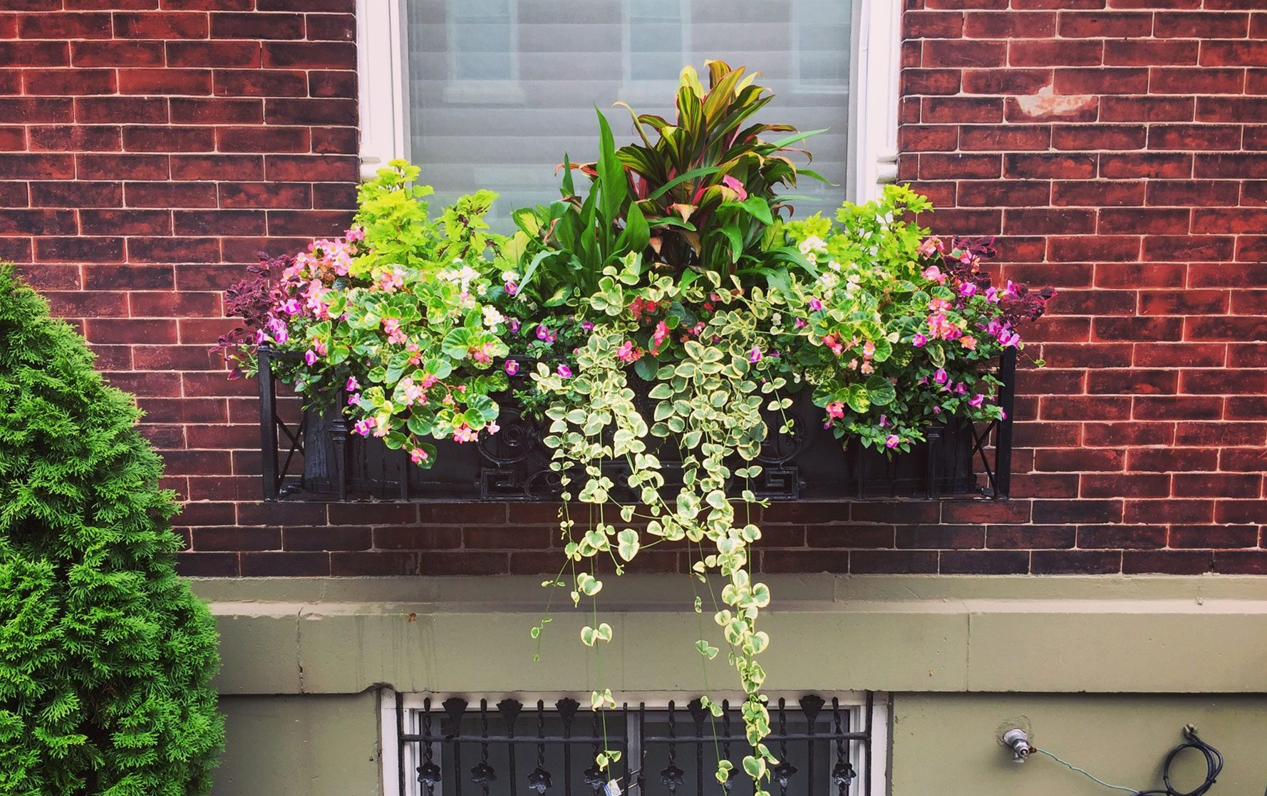 Summer Window Box Arrangement