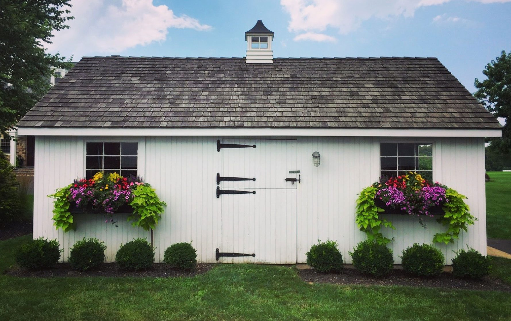 White Barn Shed with Two Window Boxes