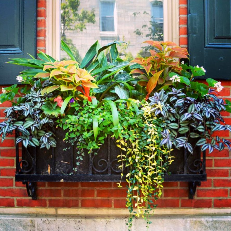 Summer Window Box Arrangement with green plants