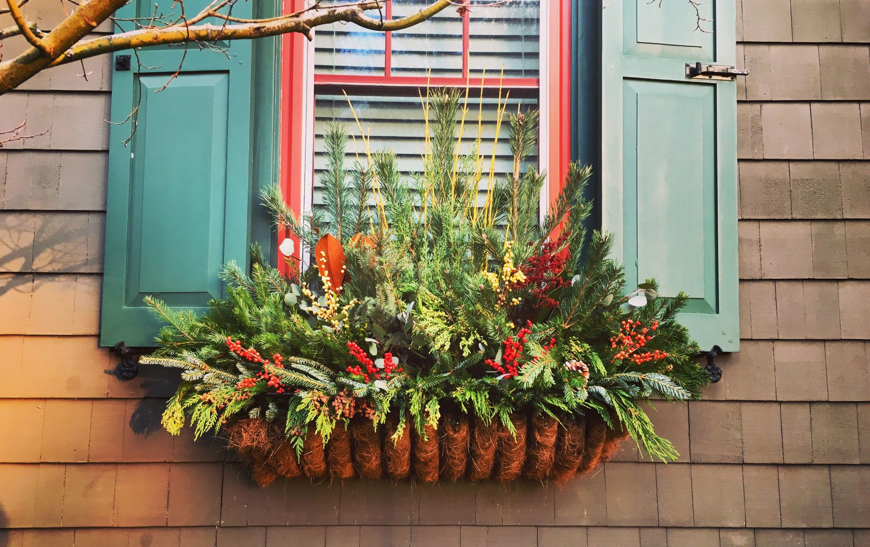 Window Box Arrangement with Pine and Holly Berries