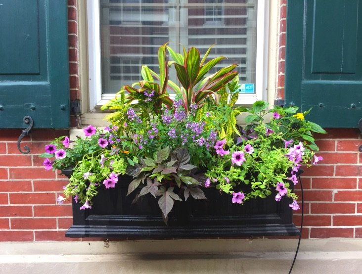 Summer Window Box Arrangement with Green Plants and Purple Flowers.