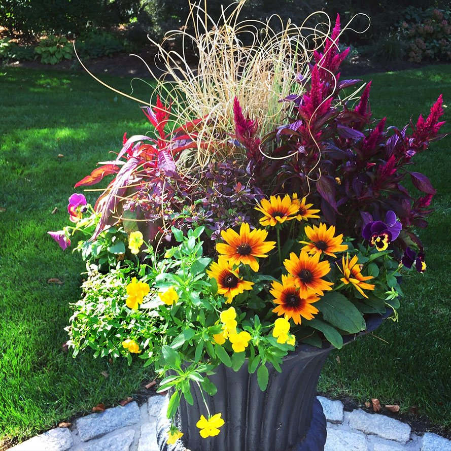Colorful plant and flower arrangement in outdoor planter