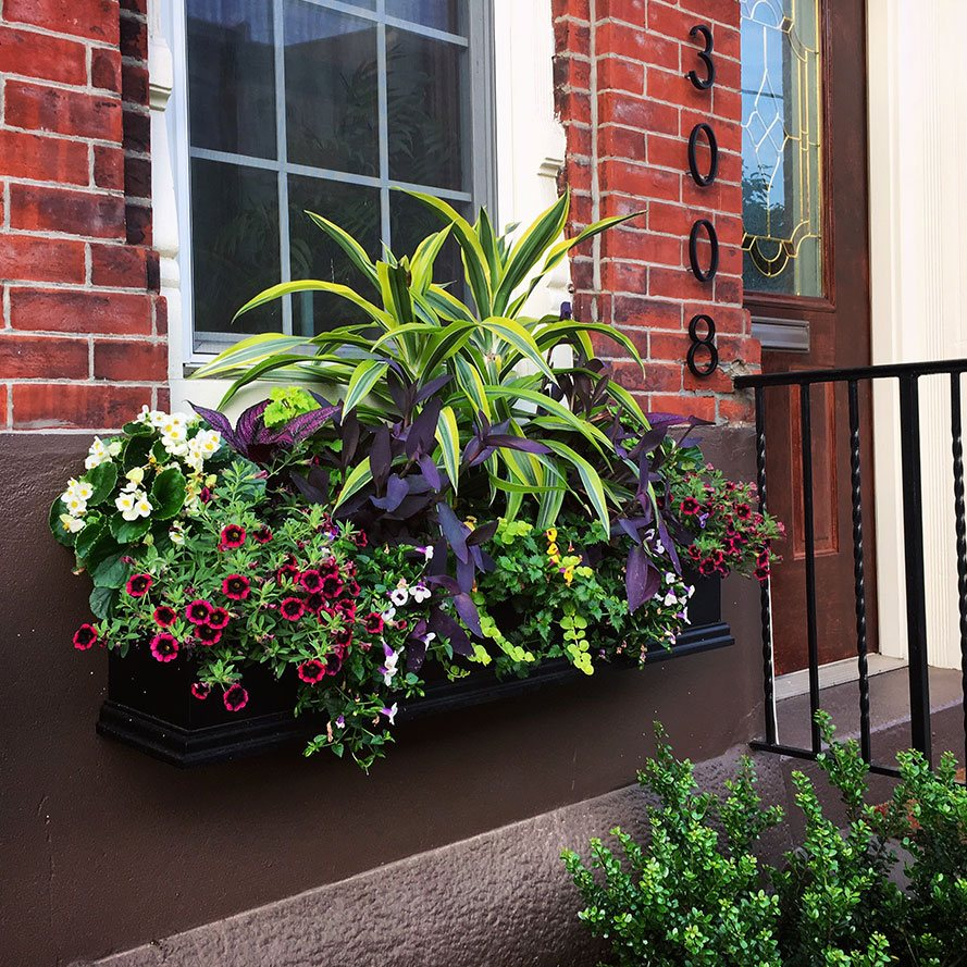 Summer Window Box Arrangement with Green Plants and Red Flowers