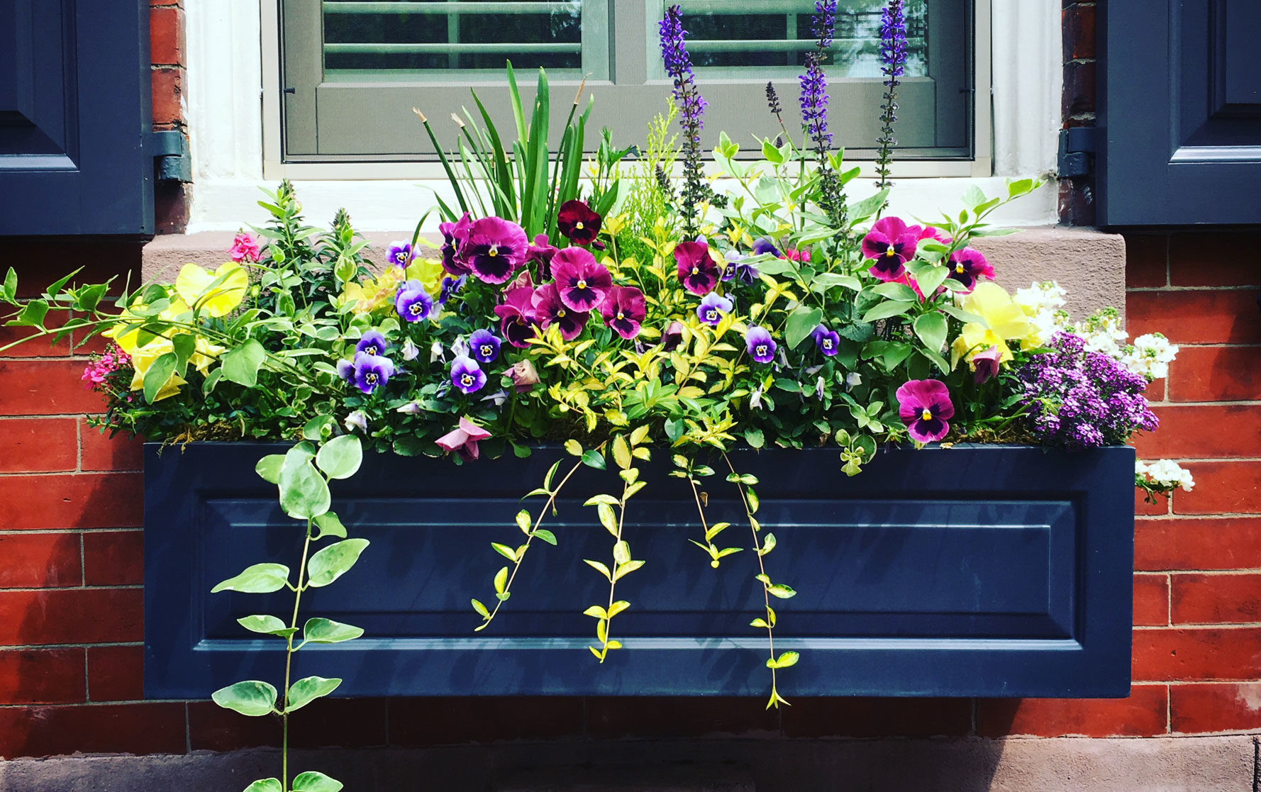 Blue Window Box filled with a Colorful Spring Flower Arrangement