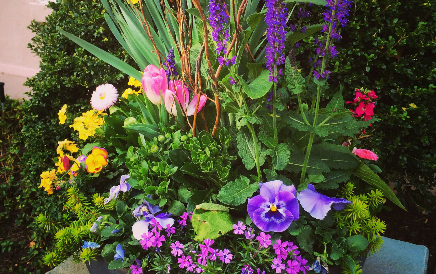Spring Planter Arrangement with purple, pink, and yellow flowers