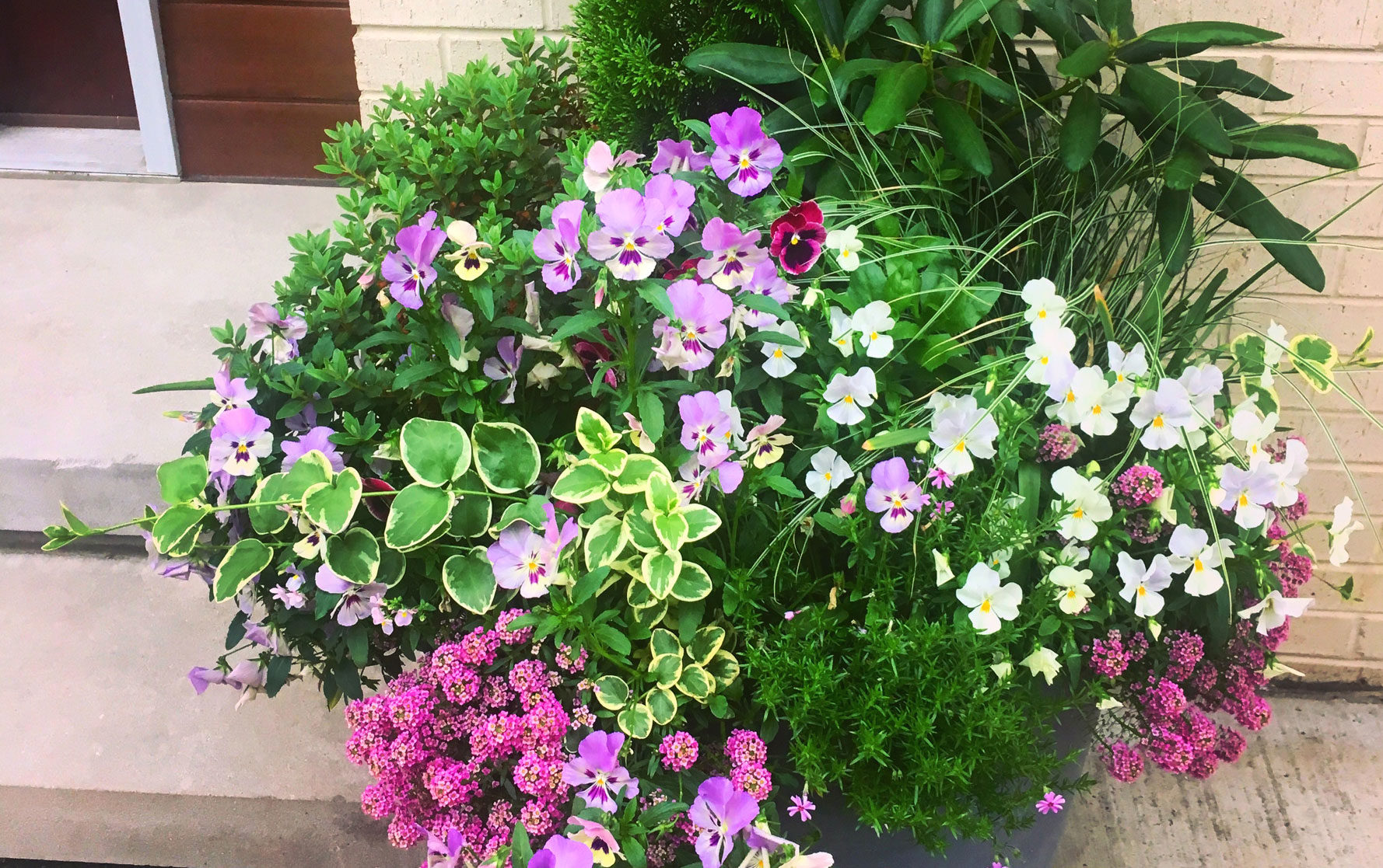 Purple and White Front Door Planter Arrangement