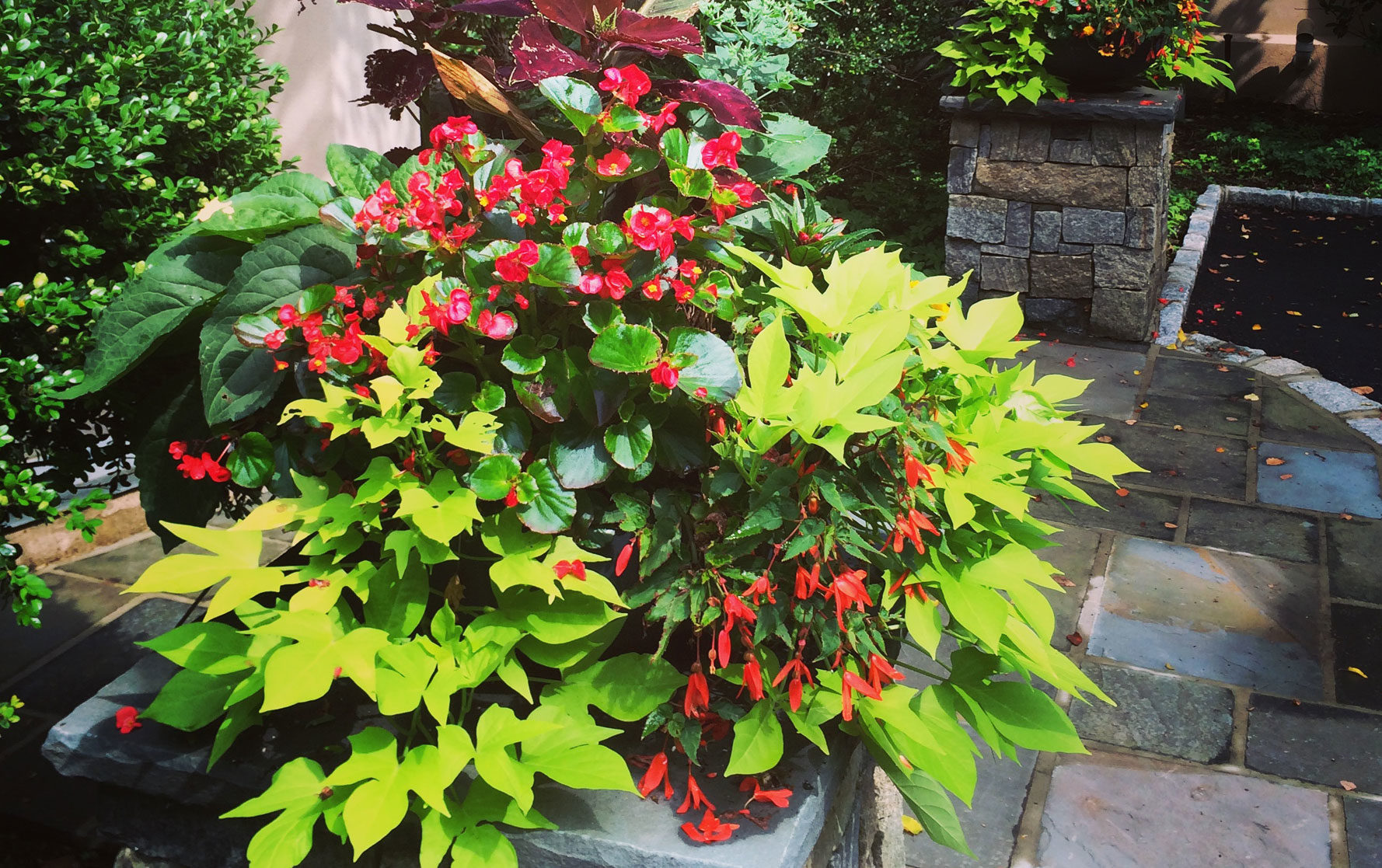 Summer Planter Arrangement with Green and Red Flowers