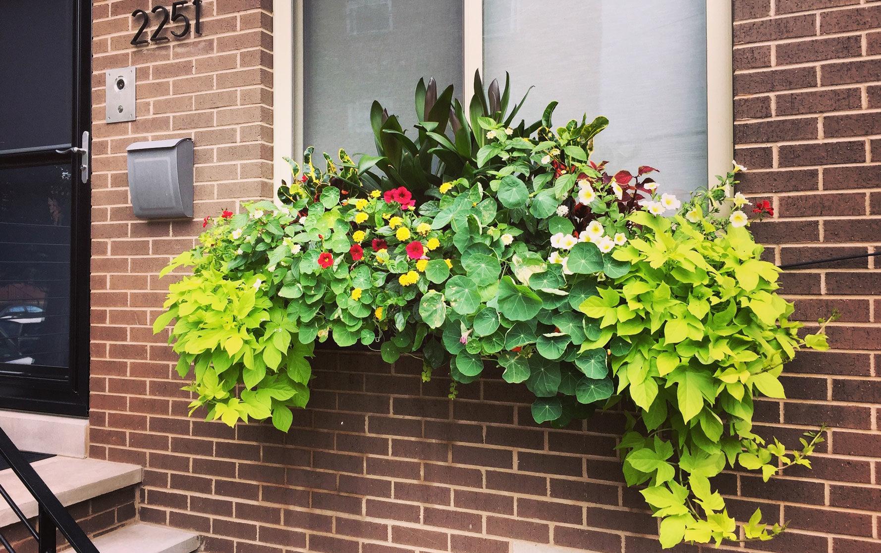 Front Window Box Summer Arrangement with Green Plants