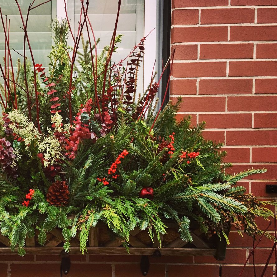 Green and Red Winter Window Box Arrangement