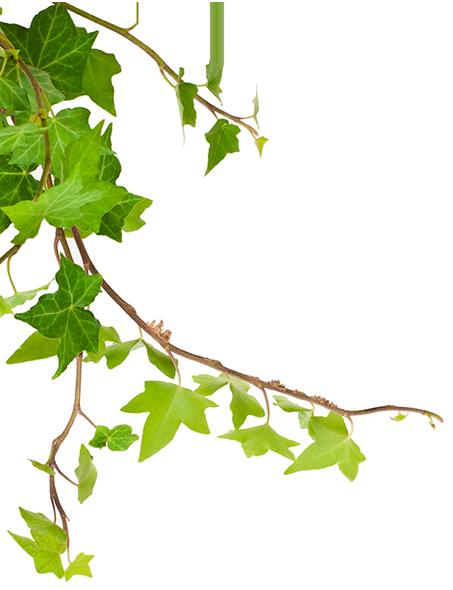 Quote Leaf