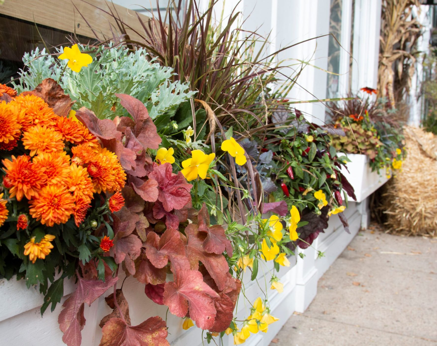 Fall Window Box Arrangement on front windows