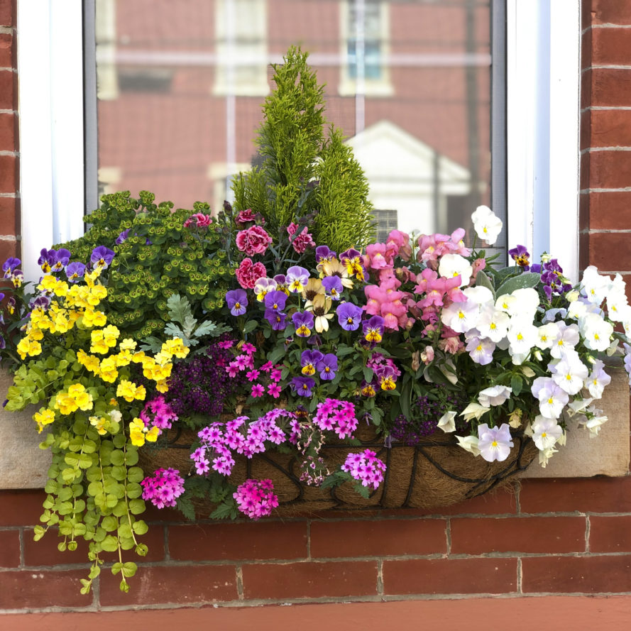 Spring Window Box Arrangement with bright, colorful flowers.