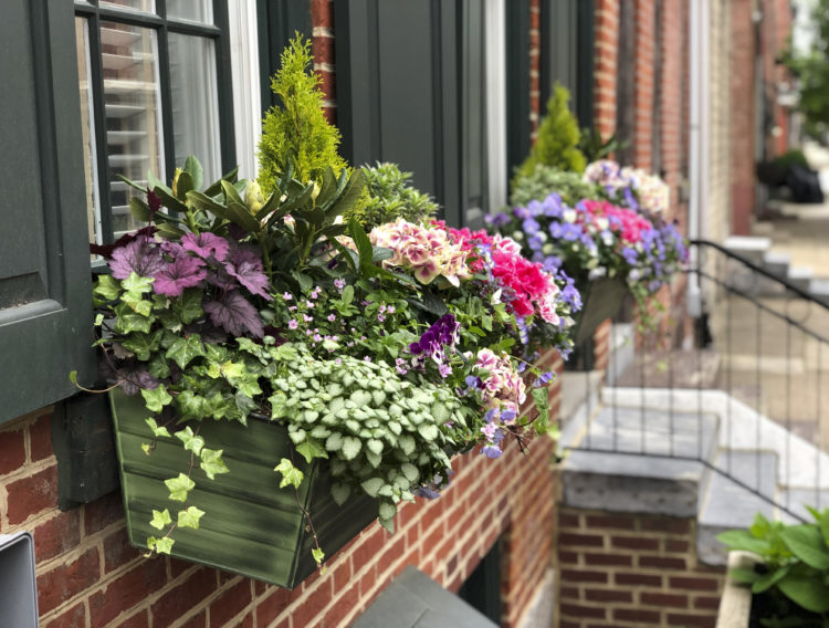 Spring Window Box Arrangement with green plants and light flowers.