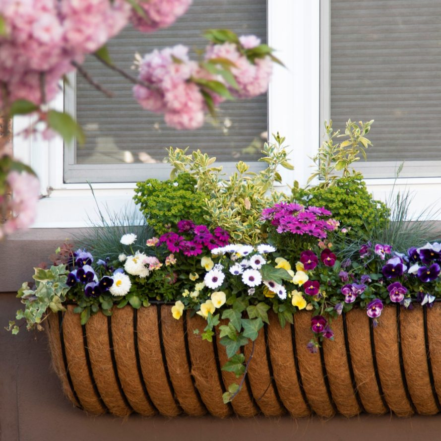 Colorful Spring Window Box Arrangement