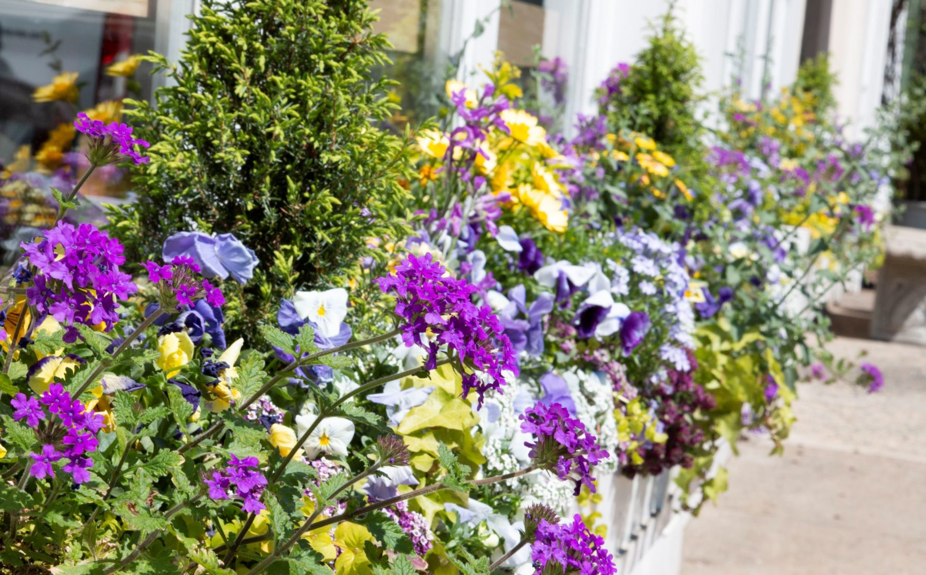 Colorful Spring Window Box Arrangements
